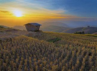 Farming Simulator – czy warto wynająć serwer dedykowany